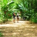 belize-eco-resort-for-sale-walking-path-to-cabanas