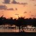 125 Acres Sapodilla Lagoon Belize 8