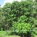 Belize Riverfront home Bullet Tree Cayo District5