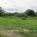 Belize Lot San Ignacio 3