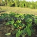 belize-25-acres-for-sale-farm10