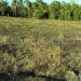 belize-25-acres-for-sale-farm11