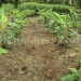 belize-25-acres-for-sale-farm12