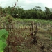 belize-25-acres-for-sale-farm13
