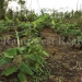 belize-25-acres-for-sale-farm15
