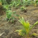 belize-25-acres-for-sale-farm16