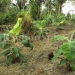 belize-25-acres-for-sale-farm17