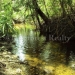 belize-25-acres-for-sale-farm2