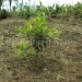 belize-25-acres-for-sale-farm23