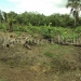 belize-25-acres-for-sale-farm28