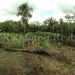 belize-25-acres-for-sale-farm29