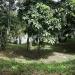 belize-riverfront-home-for-sale-in-bullet-tree-falls-village-5
