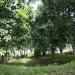 belize-riverfront-home-for-sale-in-bullet-tree-falls-village-6