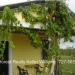 Iconic Profitable Restaurant in Belize for Sale6