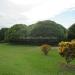 Large Lychee Farm in Belize 2