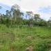 Large Lychee Farm in Belize 21