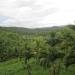 Large Lychee Farm in Belize 36