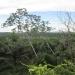 Large Lychee Farm in Belize 37
