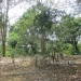 Five Acres western Belize with Home32