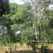 Five Acres western Belize with Home34
