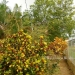 Home in St. Margaret's Village Cayo District Belize28