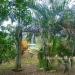 Home in St. Margaret's Village Cayo District Belize3
