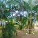 Home in St. Margaret's Village Cayo District Belize4