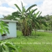Belize 2 Bedroom home san Ignacio4