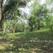 1 Acre Lot San Ignacio 1