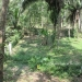 1 Acre Lot San Ignacio 3