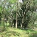 1 Acre Lot San Ignacio 7