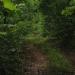 1500 Acres Corozal lush green