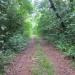 1550 Acres Corozal Road through Property