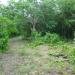 1550 Acres Corozal property