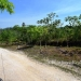 Farm on 51 Acres near Spanish Lookout2