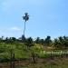 Farm on 51 Acres near Spanish Lookout21