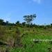 Farm on 51 Acres near Spanish Lookout7