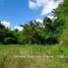 Belize Land 50 Acres near Belmopan15