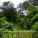 Belize Land 50 Acres near Belmopan18