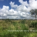Belize Land 50 Acres near Belmopan3