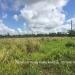 Belize Land 50 Acres near Belmopan5