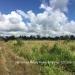 Belize Land 50 Acres near Belmopan6