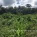 Belize Land 50 Acres near Belmopan8