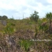 Placencia 5 plus acres for sale-PN3