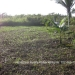 Belize Residential Lot Close Commute to Belmopan3