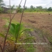 Belize Residential Lot Close Commute to Belmopan8