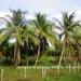 Belize Land 20 Acres near Belmopan Cayo District23