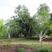 Belize Land 20 Acres near Belmopan Cayo District6