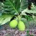 Belize Land 20 Acres near Belmopan Cayo District7