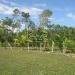 20-acre-farm-near-spanish-lookout-belize-1